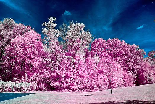 Louis Dallara - Autumn Trees in Infrared