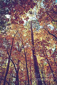 Autumn Trees by Joan McCool