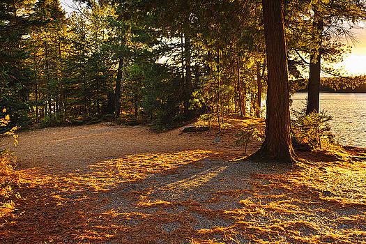 Elena Elisseeva - Autumn trees near lake