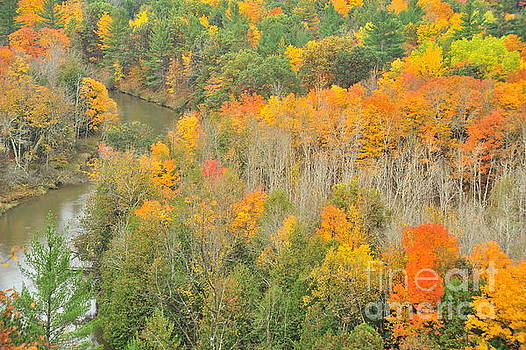 Terri Gostola - Autumn Treetops at the River bend