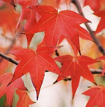 Autumn Trio by Lawrence Pratt