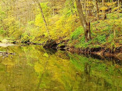 Autumn Trout Stream  by Lori Frisch