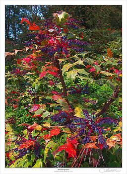 Lar Matre - Autumn Up-Close