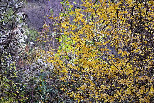 Autumn view by Julien Van Dommelen