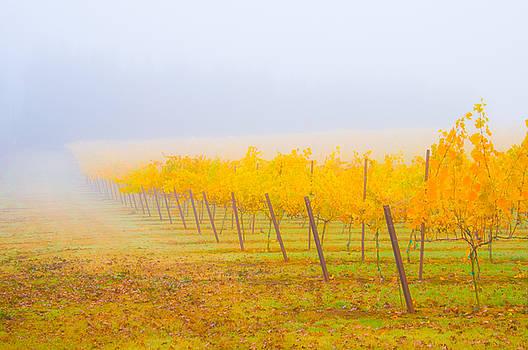 Autumn Vineyard by Larry Goss