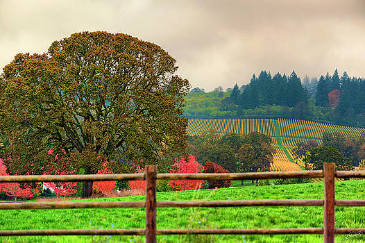 Autumn Vineyards Landscape by Dee Browning