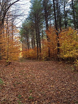 Autumn Walk in the Woods by Eric Gottesman