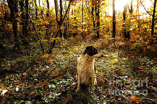 Autumn Walks With Lola by Tony Priestley
