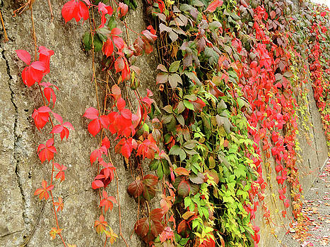 Autumn wall by Guido Strambio