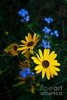 Autumn Wildflowers by Lisa Holmgreen