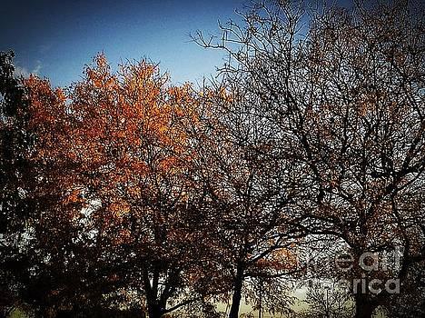 Frank J Casella - Autumn Wind