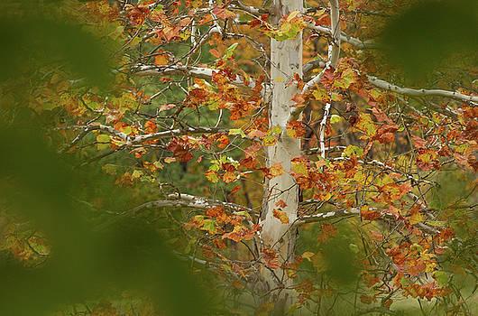 Autumn Window by Victoria Winningham