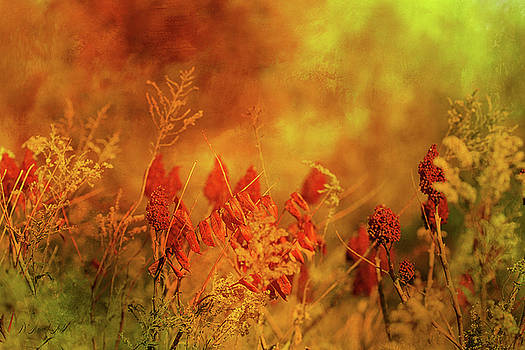 Autumn Wonders by Theresa Campbell