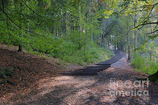 Autumn woodland 1 by Steev Stamford
