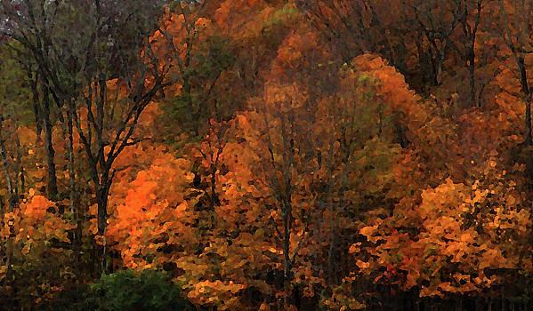 Autumn Woods by Rowana Ray