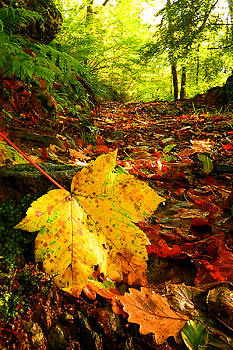 Dominick Moloney - Autumn yellow leaf