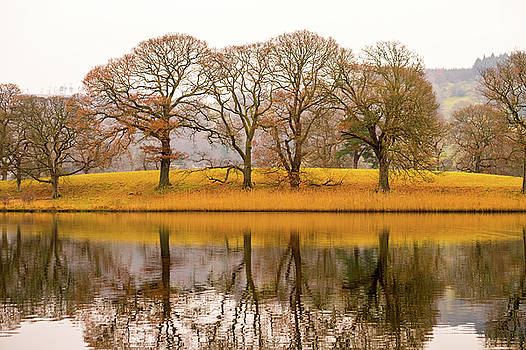 Autumnal Colors by David Ridley