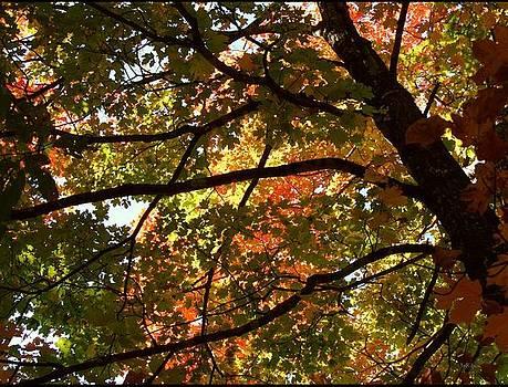 Alana  Schmitt - Autumnal Dazzle
