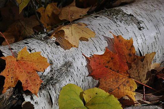Linda Goad - Autumnal Melange