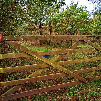 Autumnal Orchard by Anne Kotan