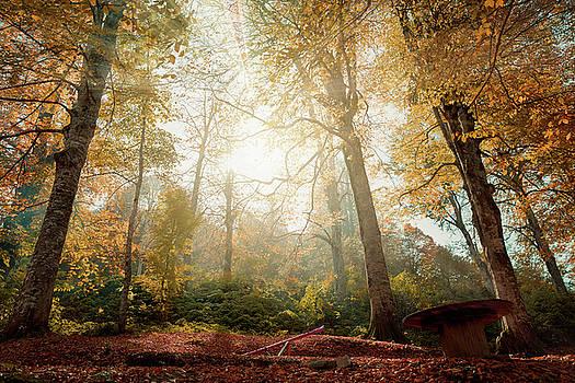 Autumnal Symphony by Musa GULEC