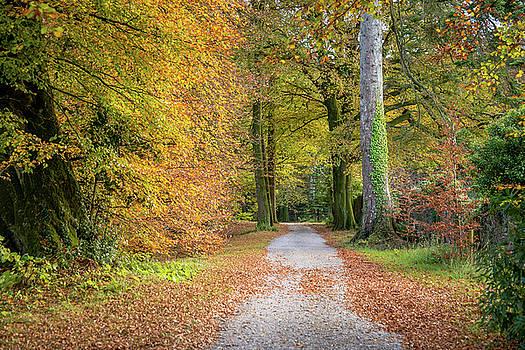 Autumnal Walkway by Martina Fagan