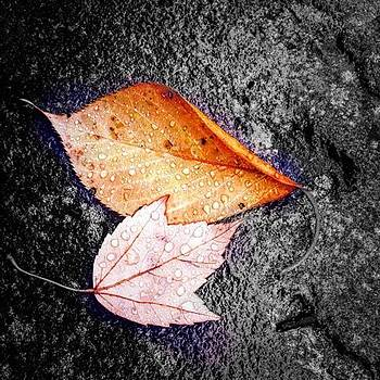 Rainy Day Leaves by Sharon Halteman