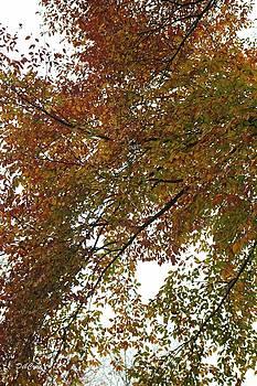 Autumn's Abstract by Deborah  Crew-Johnson