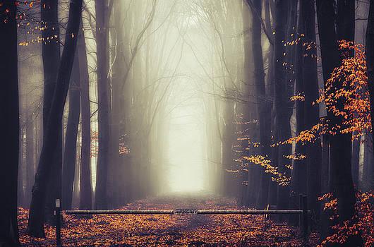 Autumn's gate by Rob Visser