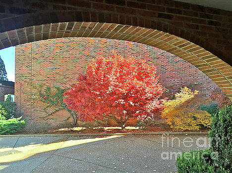 Autumn's Glory by Barbara Plattenburg
