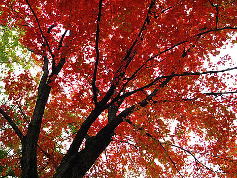 Autumn's Glory by Lynn Harrison