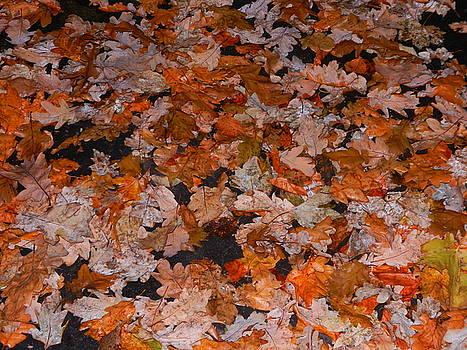 Autumn's Golden Carpet by Nik Watt