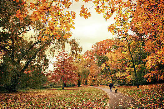 Autumn's Golden Path by Jessica Jenney