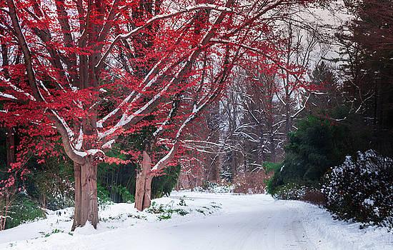 Autumn's Last Kiss by Karen Wiles