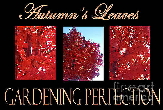Autumn's Leaves by Gardening Perfection