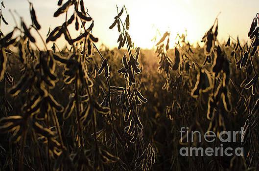 Autumn's Light by Kassie Nelson