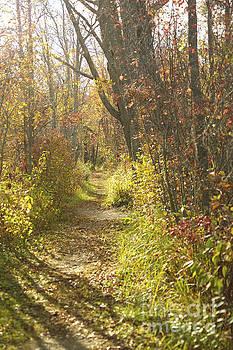 Elaine Mikkelstrup - Autumns Path