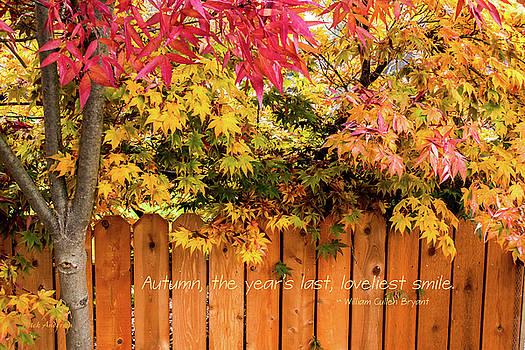 Mick Anderson - Autumn