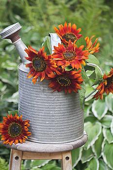 Sandra Foster - Autumns Sunflower Delight
