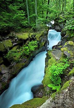 Avalanche Creek by Matt Tilghman