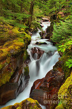 Adam Jewell - Avalanche Creek Through The Forst