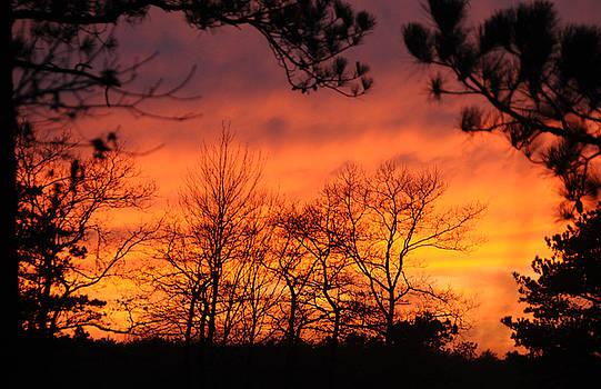 Avalon Sunset by Lauren Jorgensen