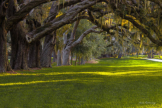 Avenue of Oaks 2 St Simons Island GA by Reid Callaway