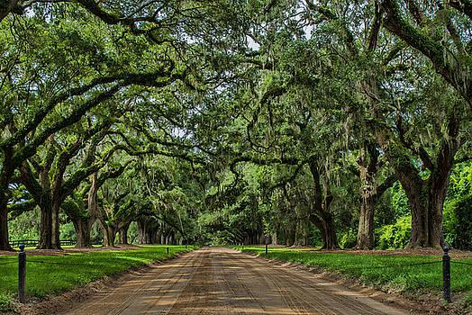 Avenue of Oaks by Steve Hammer