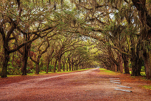 Avenue of the Oaks by Andrew Soundarajan