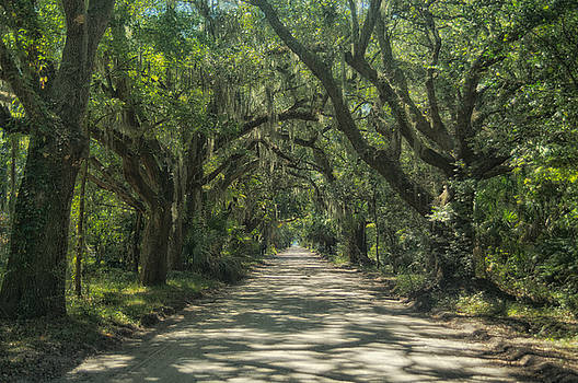 Avenue of the Oaks by Sandy Schepis