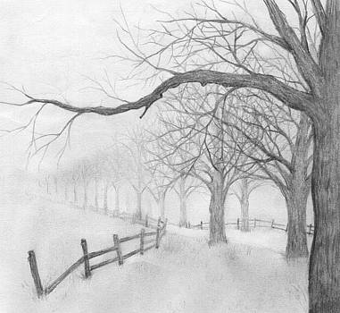 Avenue of Trees by Chris Hall