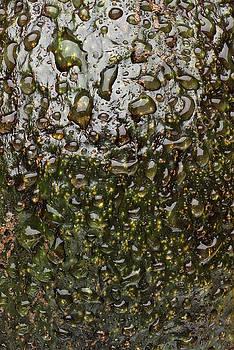 Avocado Skin by Steve Gadomski