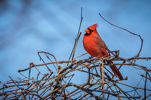 Awaiting Spring by Gary E Snyder