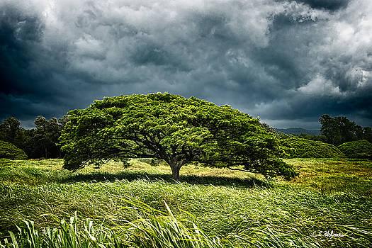 Christopher Holmes - Awaiting the Rain